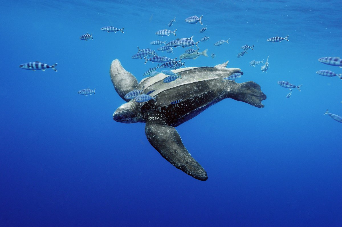 Sea Turtles in the Bahamas